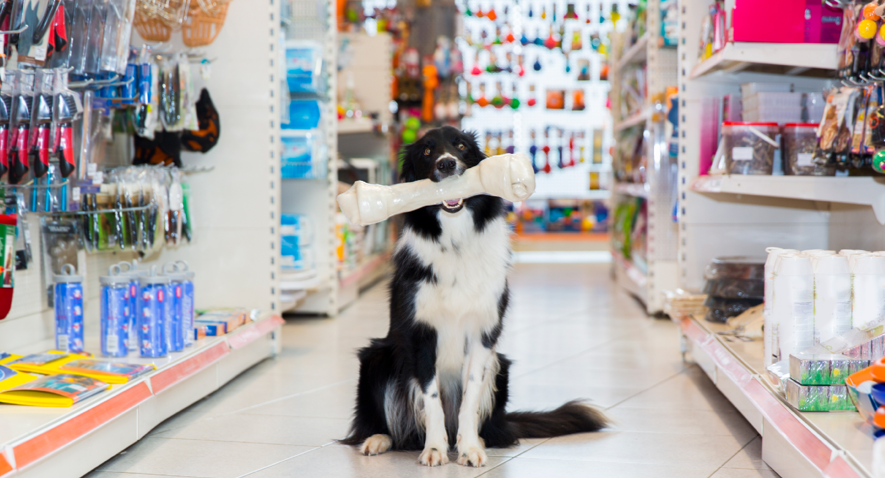 How To Use Growth Capital to Grow Your Pet Store
